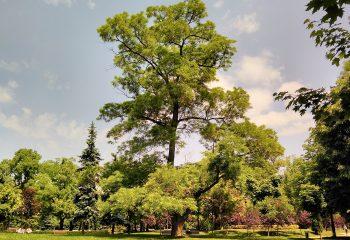 Картотекиране на дълготрайната растителност